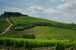 winery sanitation